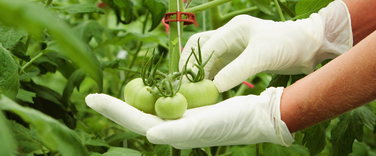 food-safety-course-1